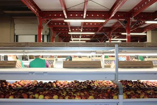 Giotto: agro-building ecosostenibile con Siemens